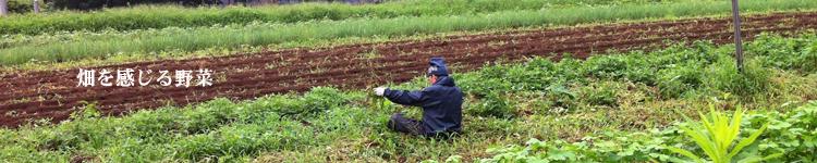 畑を感じる野菜3